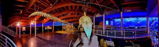 vista dell'interno della sala del mare